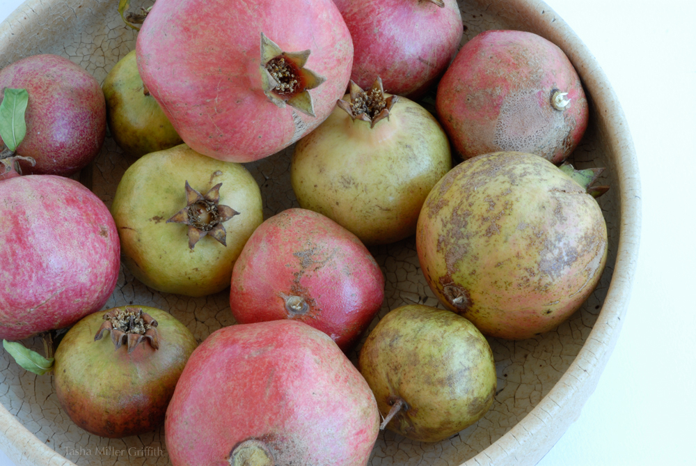 how to grow pomegranate from a seed
