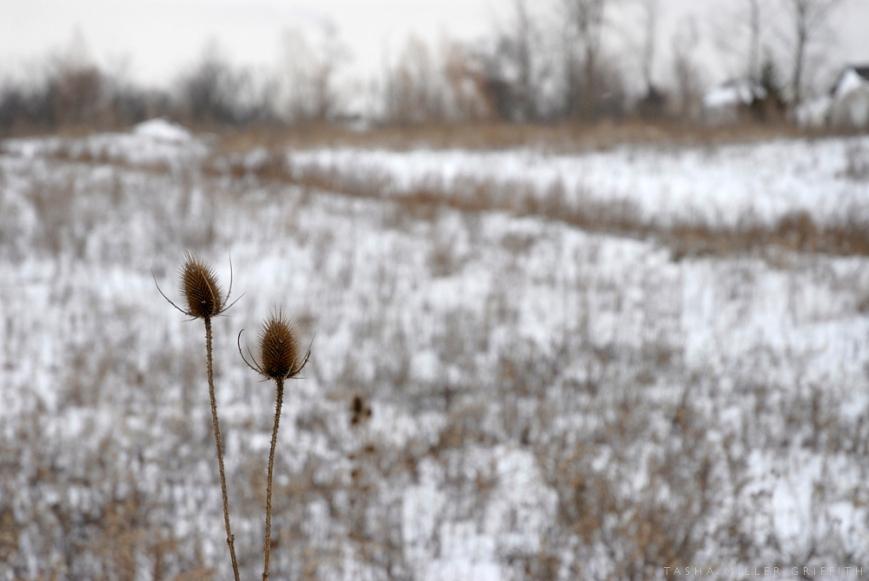 michigan winter 3