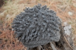 hedgehog hat outside 1