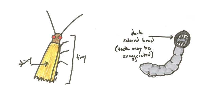 moth and larva