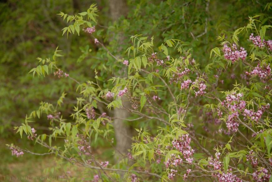 wildflowers texas spring 2014 12