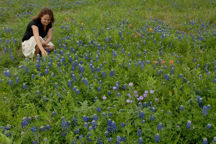 wildflowers texas spring 2014 9