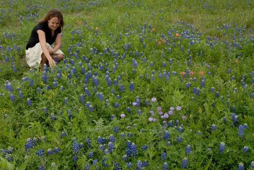 wildflowers texas spring 2014 9