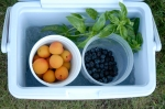 washed fruit in cooler